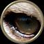 Tigers Eye Web Design